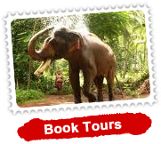 north-and-south-india-tour