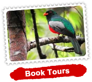 Special Bird Watching Tour