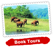 Special South India Tour